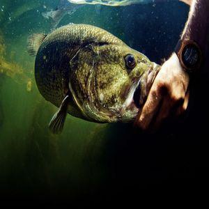 Техника - залог успешной рыбалки